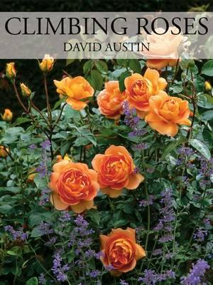 Climbing Roses By Austin, David